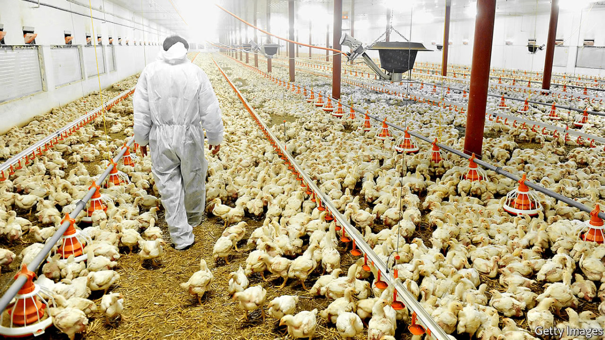 Mails STORE 130-Poultry-Farming-Industry-Email-List Poultry Farming Industry Email List | Poultry Farming Industry Mailing Database    email list, mailing list, email addresses, Business Email List